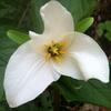 Pnw Botany