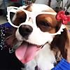 Petsodia Blog - A Place for Pet's love