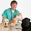 Veterinary Secrets   Youtube