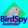 Bird Spy Australia | Youtube