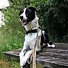 ZeroBites Dog Training