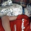 Best Pets Dog Training
