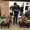 K9 Stars Dog Training & Behaviour Solutions Blog