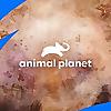 Animal Planet | Youtube