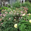Garden Guru By Allan Becker