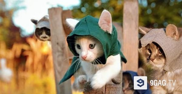 Cats Plus Games Equals Love!