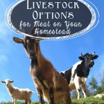 Guide To Profitable Livestock | How To Farm Livestock | Livestock Farming For Beginners