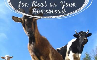 Guide To Profitable Livestock | How To Farm Livestock | Livestock Farming For Beginners