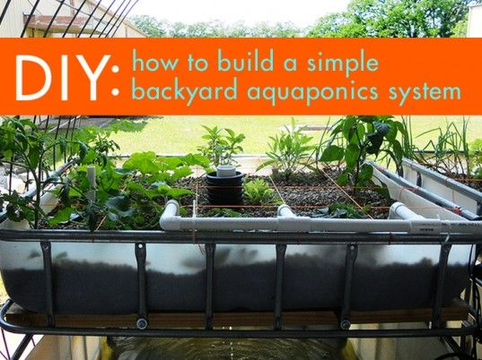 How To DIY Aquaponics – The How To DIY Guide on Building Your Very Own Aquaponic System