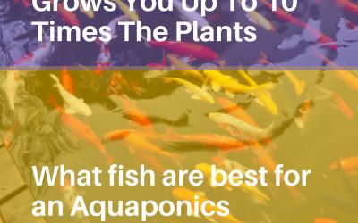 Aquaponics 4 Idiots – The Idiot Proof Way of Building an Aquaponic System