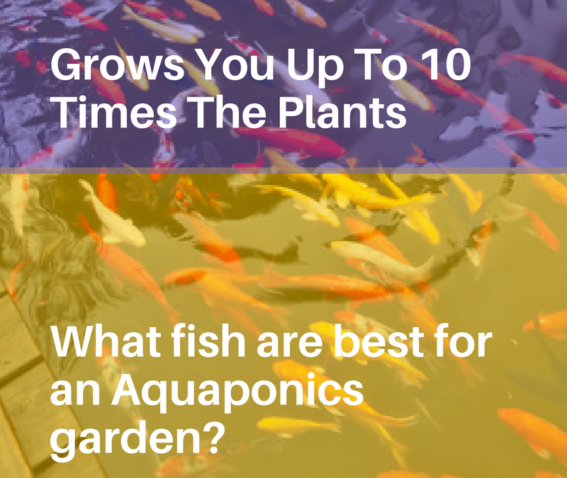 Aquaponics 4 Idiots – The Idiot Proof Way of Building an Aquaponic System