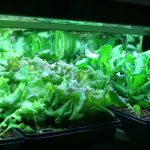 DIY Vermicomposting with Hydroponics/Vermiponics