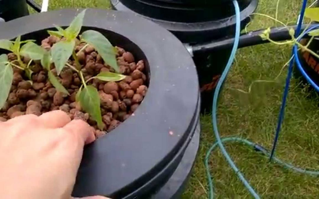 DIY deep water hydroponics garden
