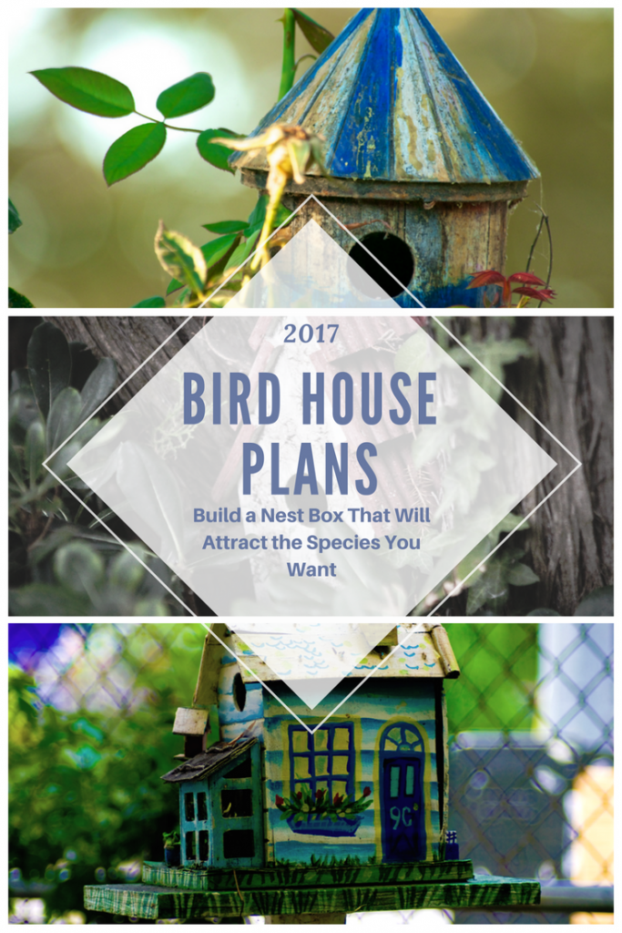 Bird house plans build a nest box that will attract the for Types of birdhouses for birds