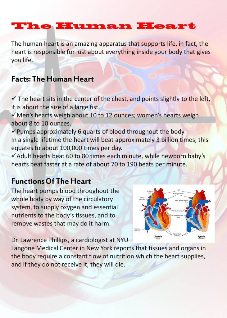 The Human Heart, facts, functions of the heart