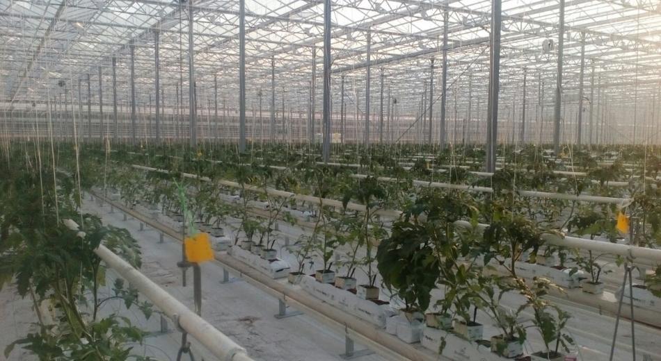 Eco Culture - Hortilux