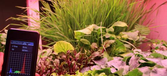 Green Simplicity - Hortilux
