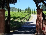 winery-244598_640
