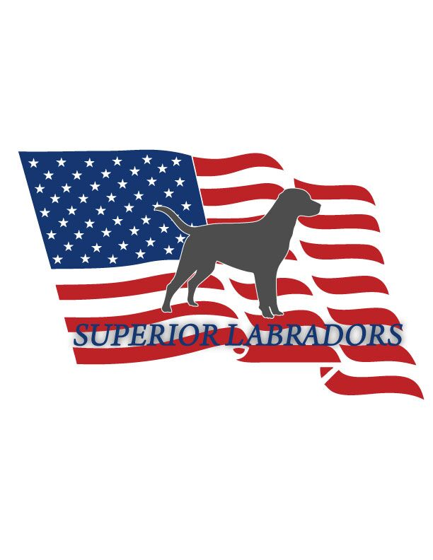 Superior Labradors