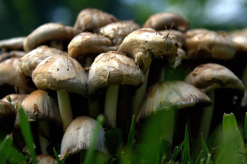 Happiness Mushroom Soup