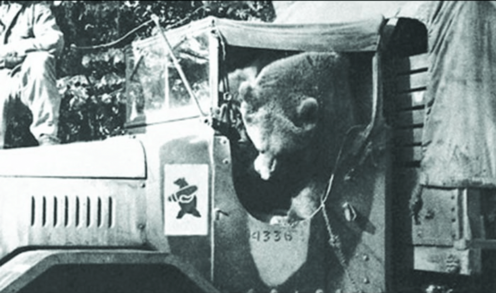 Wojtek often sat in the passenger seat in a jeep. Often hanging his head out the window and shocking passers by.