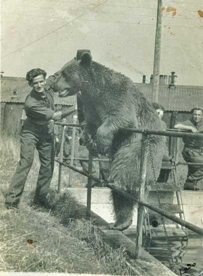 Wojtek at the Edinburgh Zoo with an old army comrade.