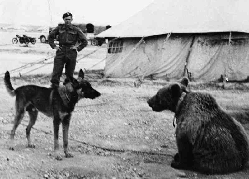 Wojtek enjoyed the company of other animals.