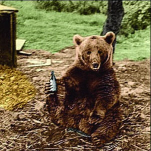 Wojtek enjoyed drinking beer and was given beer as rations.