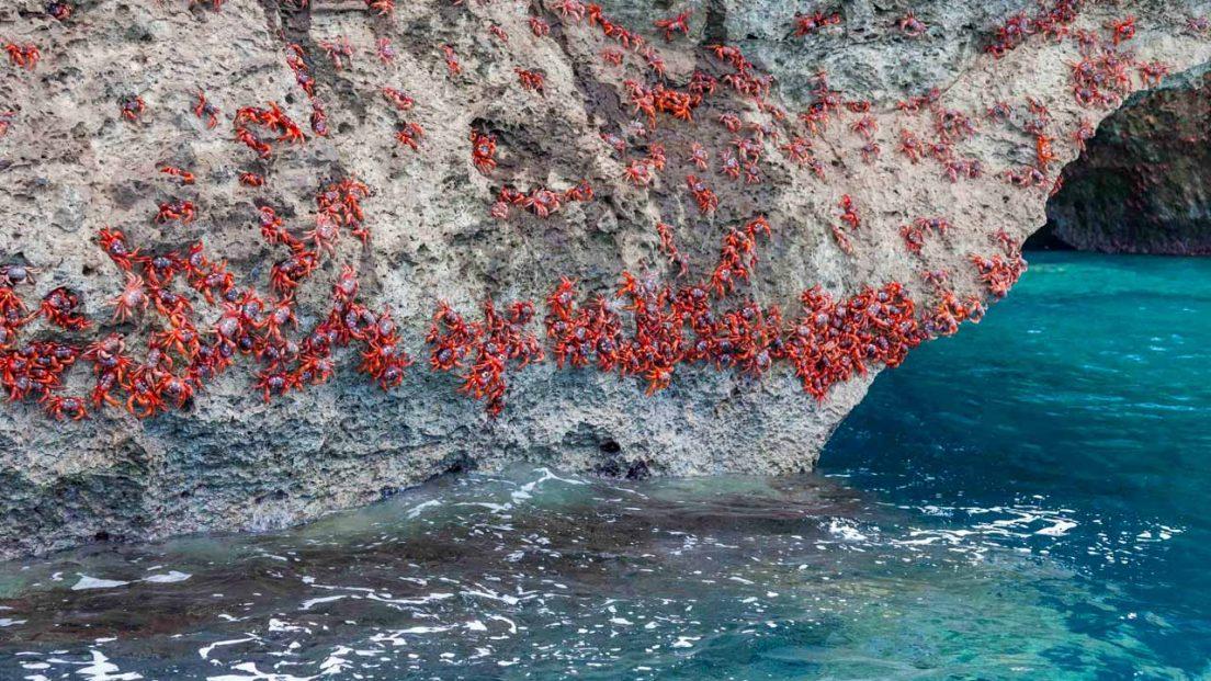 crabs-shore-2