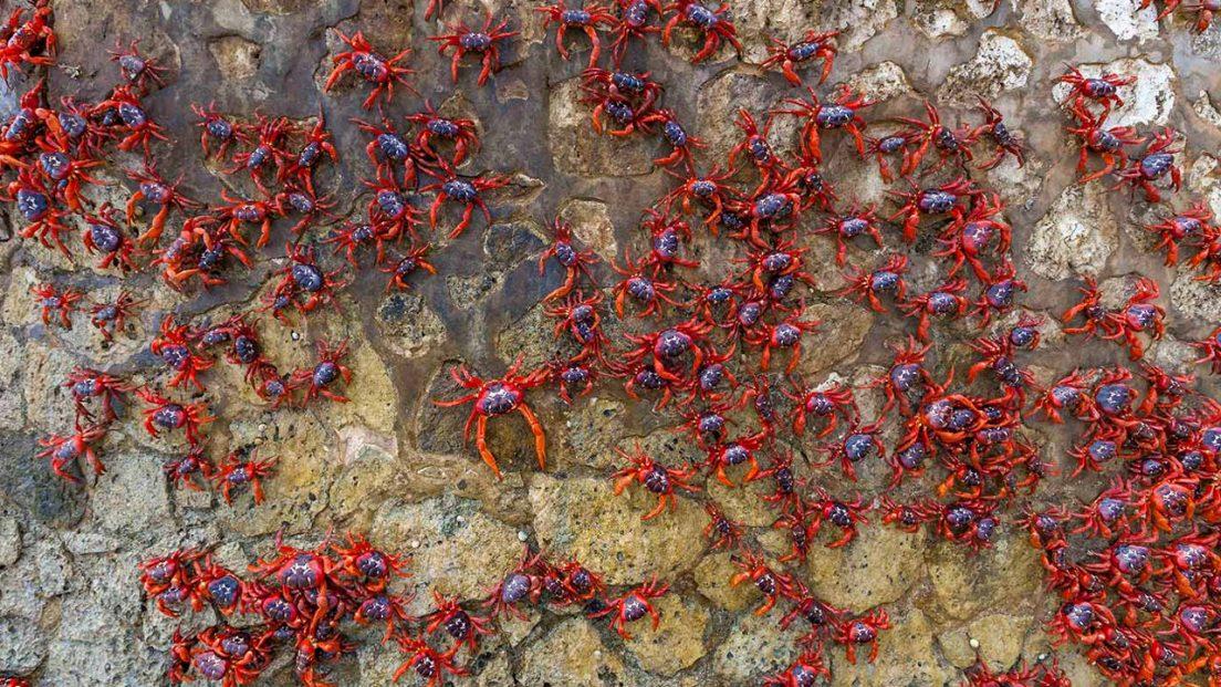 crabs-rock