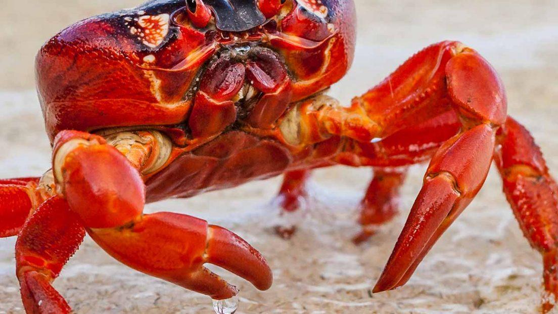 crabs-closeup