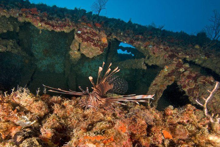 Lion fish at Key Largo Reef