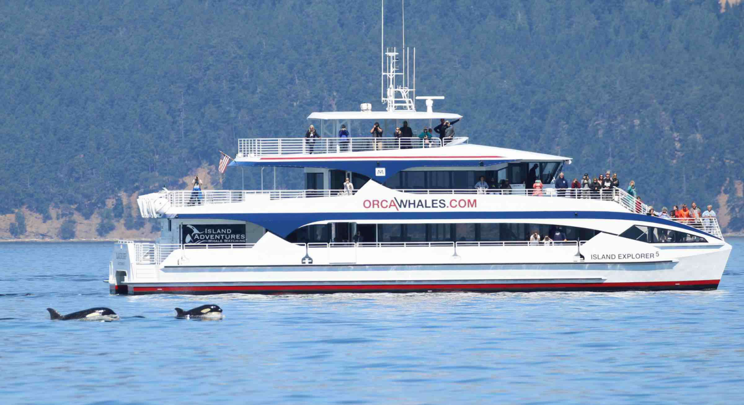 Seattle Whale Watching in the San Juan Islands