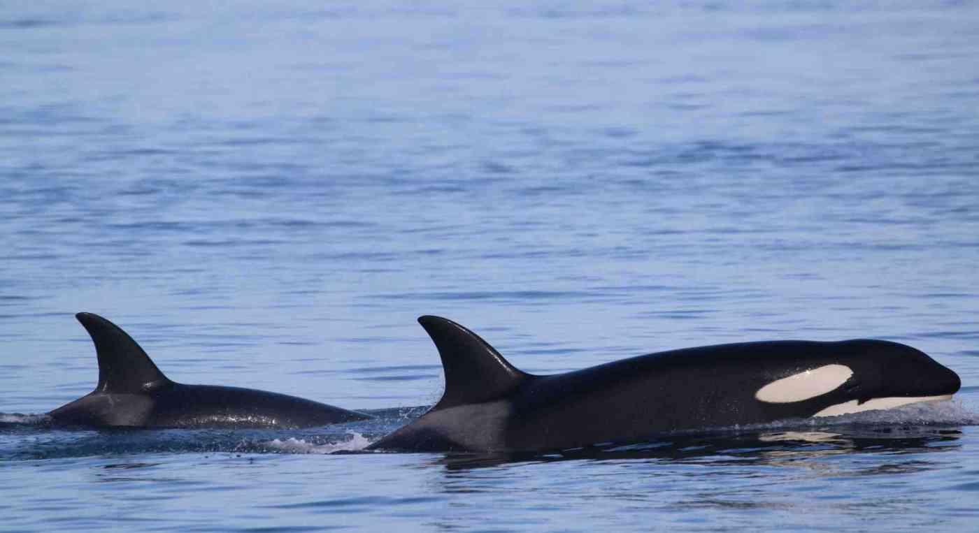 Seattle Whale Watching Washington
