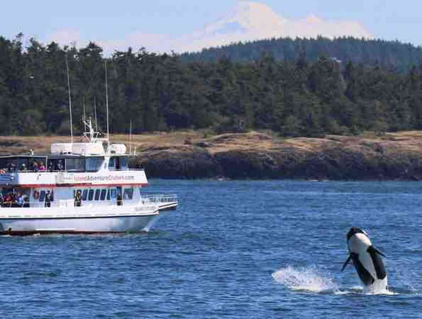 Best Whale Watching Boats in Washington State