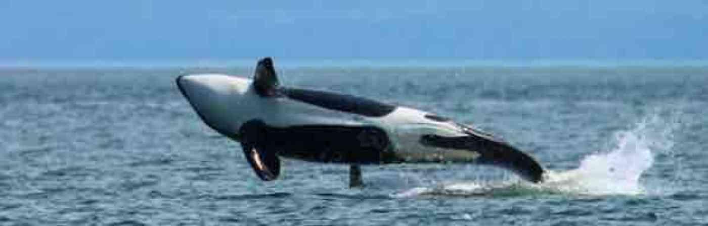 La Conner Washington Whale Watching
