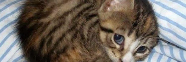 sad-kitten