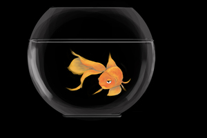 Blackgoldfish
