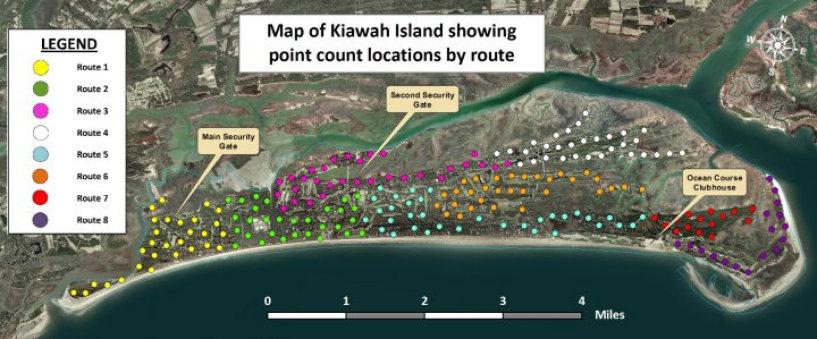 kiawah_wildlife024003