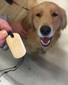Golden Dog Tag in 18k Yellow Gold Vermeil