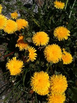 K2 garden weeds