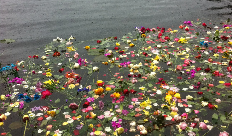 Flowers on Auke Lake