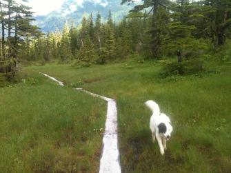 Dan Moller Trail