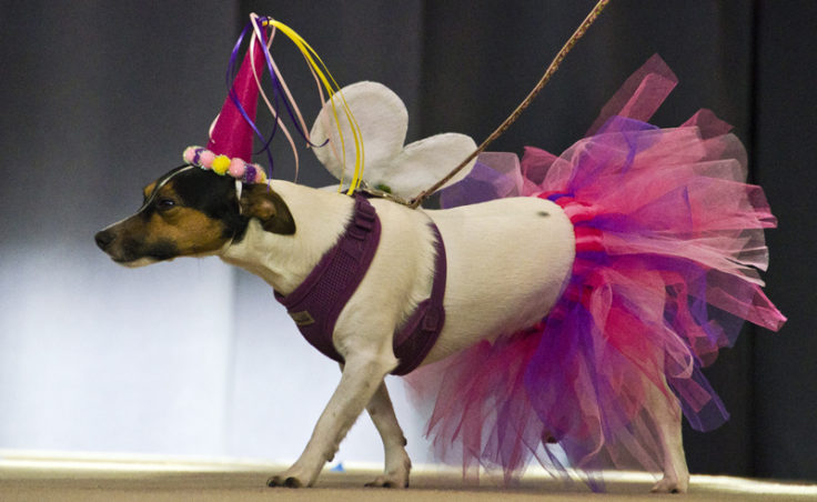 Begley shows off a pink tutu and wings on stage.