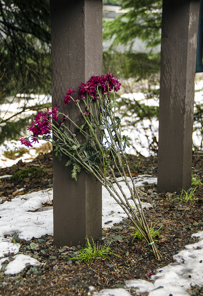 A group of carnations sets against the Auke Lake Trail sign.