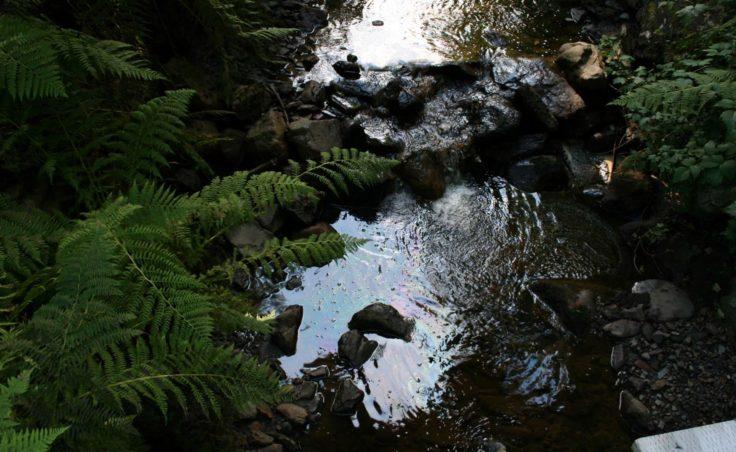 Rainbow sheen seen on the creek.