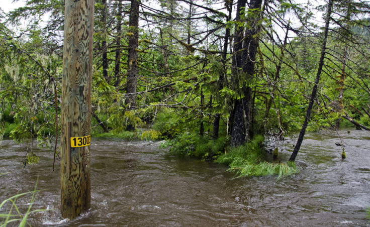 June rainfall broke records and dropped temperatures in Juneau. Rushing water floods the ditches along Montana Creek road and come withing a few feet of covering the road.