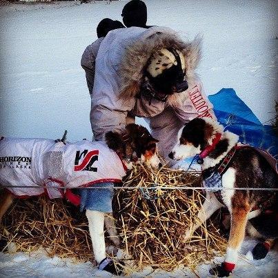 Aliy Zirkle beds down her team in Koyuk.
