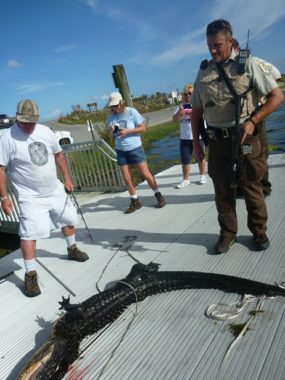A Fish and Wildlife Service team caught and killed an alligator after the animal attacked a 6-year-old boy Friday. The boy survived with only incidental wounds. U.S. Fish and Wildlife Service