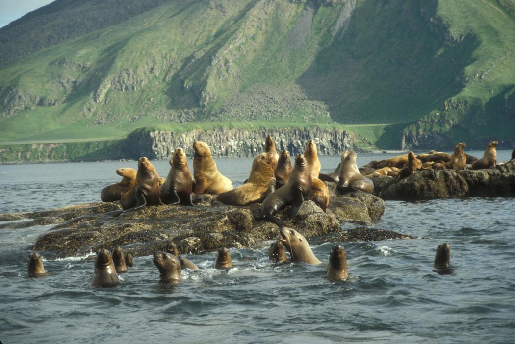 ellar Sea Lion